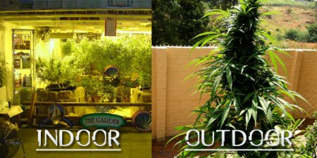 Cannabis Cultivation. Indoors VS Outdoors