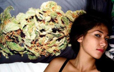 Would you Like to Sleep on Cannabis Pillow?