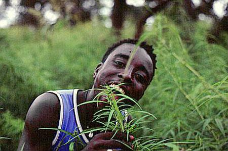 Marijuana in Africa