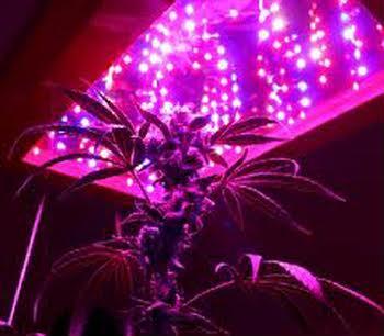 Grow Lights for Marijuana Cultivation